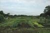大篠塚市民農園 at 千葉県佐倉市